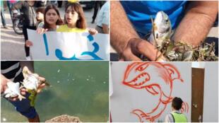 في مدينة صيادة في تونس، يتظاهر السكان ضد التلوث في خليج المنستير والصادر من محطات التطهير منذ عدة سنوات. وخلال فترة الحجر الصحي الشامل ومع توقف النشاط الصناعي في المنطقة، عادت إليها الأسماك من جديد.
