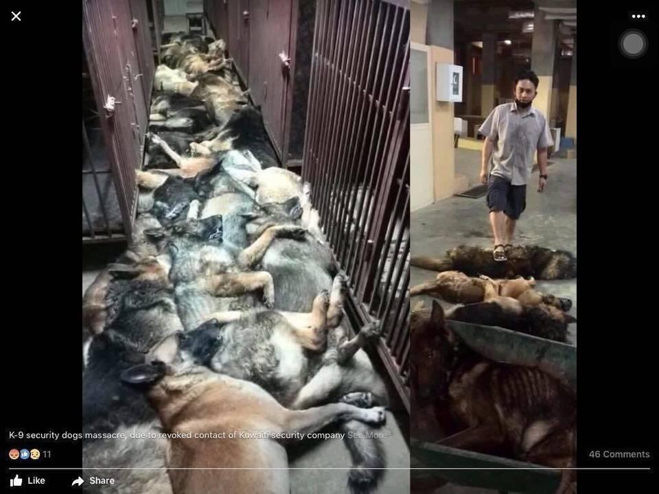 Photos des chiens tués postées sur Facebook par un ancien employé.