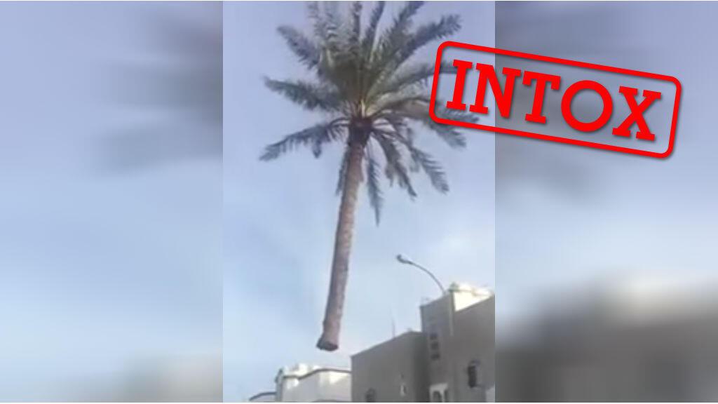 """Un """"palmier volant"""" qui n'a rien de magique..."""