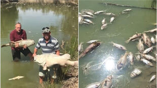 Menindee residents hold up dead Murray cod (left); dead fish litter the Darling River. Source: Facebook