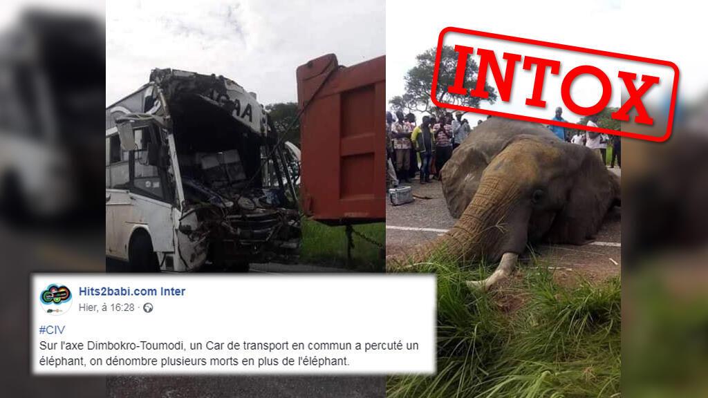 Un éléphant aurait, selon des publications ivoiriennes, été tué dans une collision avec un bus. L'image est vraie mais vient d'un autre pays.