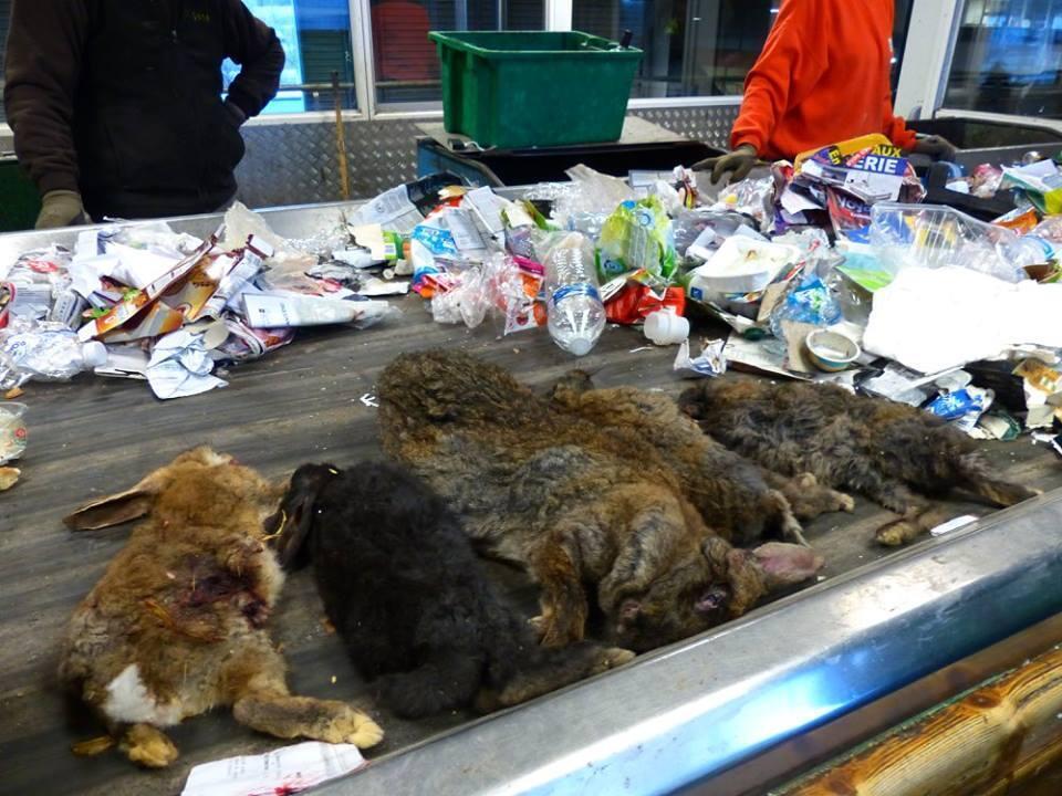 Les employés d'un centre de tri dans le département du Gers ont découvert des cadavres de lapins dans une poubelle. Facebook.