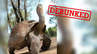 This photo is said to show a 344-year-old tortoise who recently died. Our team decided to investigate – could this wild story possibly be true?