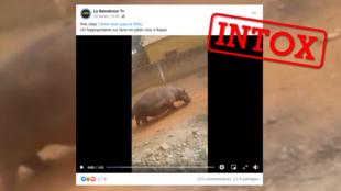 TEASER intox hippo mali