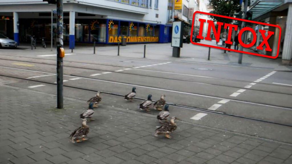 Captures d'écran de la vidéo d'une agence de publicité allemande prétendant que des canards s'arrêtent au feu rouge dans une ville..