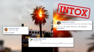 Un palmier qui prend feu spontanément à cause des fortes chaleurs au Koweït ? Attention, c'est inexact !