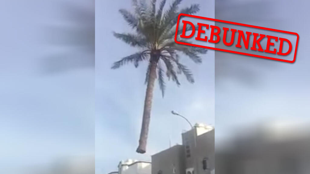 """A screengrab from the video of a """"flying palm tree""""."""