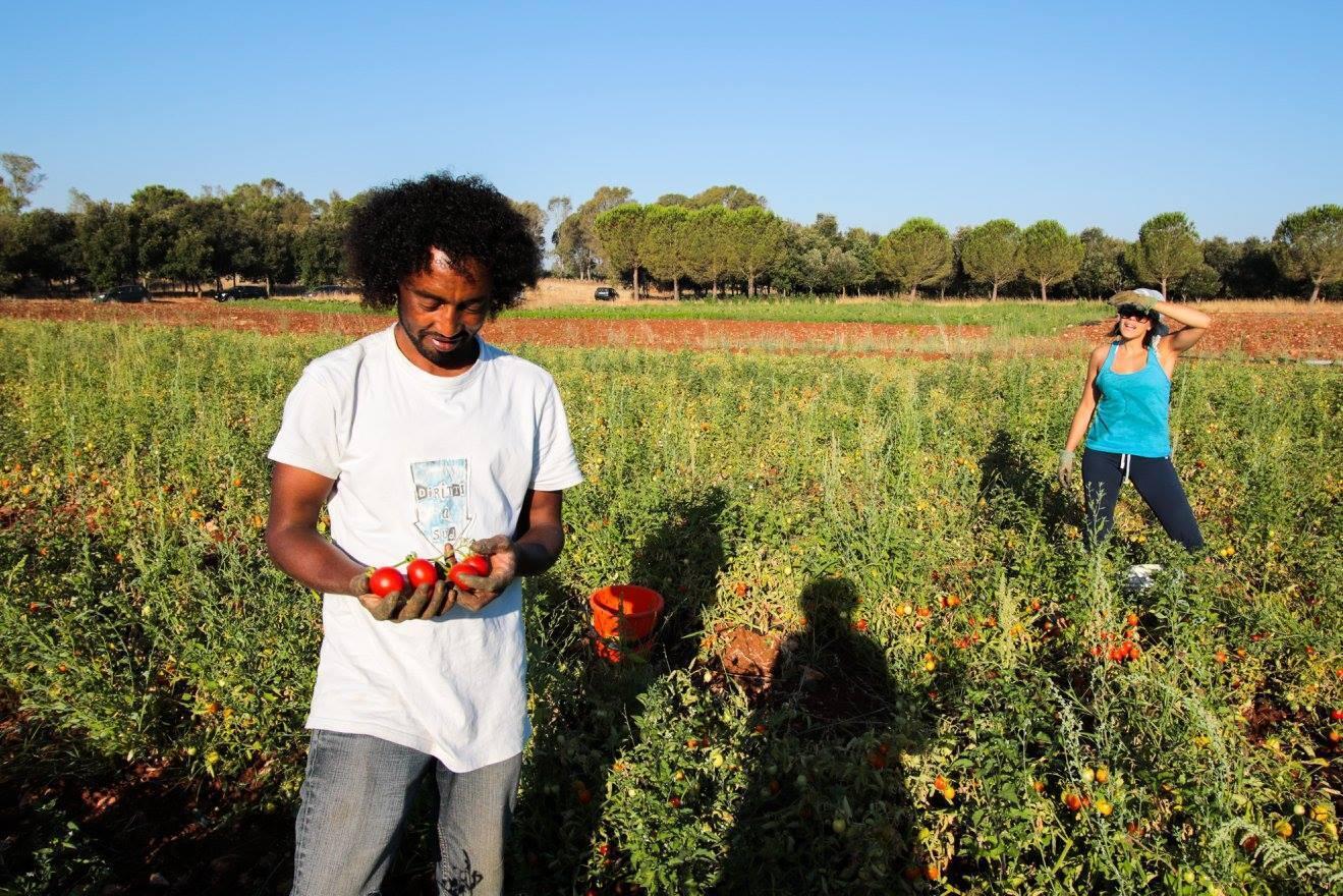 La récolte de tomates à Nardò en 2017. Photo publiée sur la page Facebook de l'association Diritti a Sud, prise par Giorgio Carcagni.