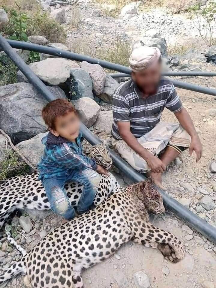 Photo of the man who killed two rare leopards in the region of Lawdar, in the south of Yemen. These photos have been circulating on social media since the beginning of July.
