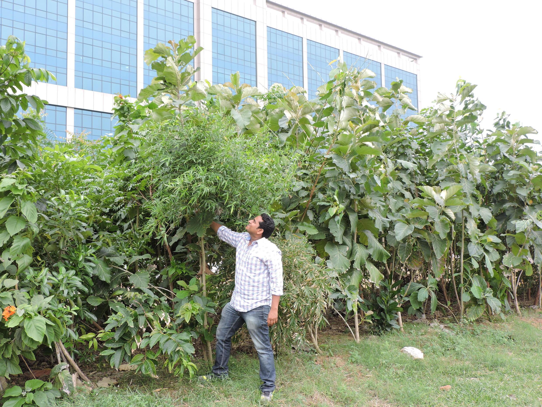 L'employé d'une entreprise devant une petite forêt plantée par Shubhendu Sharma (Photo : Shubhendu Sharma)