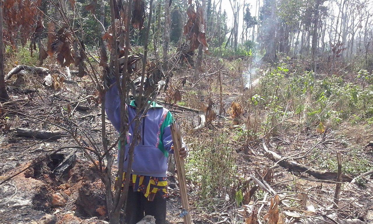 Un occupant de la forêt près de Zagné constate les dégâts dans sa plantation. Selon lui, des agents de la Sodefor ont incendié sa plantation quelques jours auparavant. Derrière lui, on aperçoit encore de la fumée