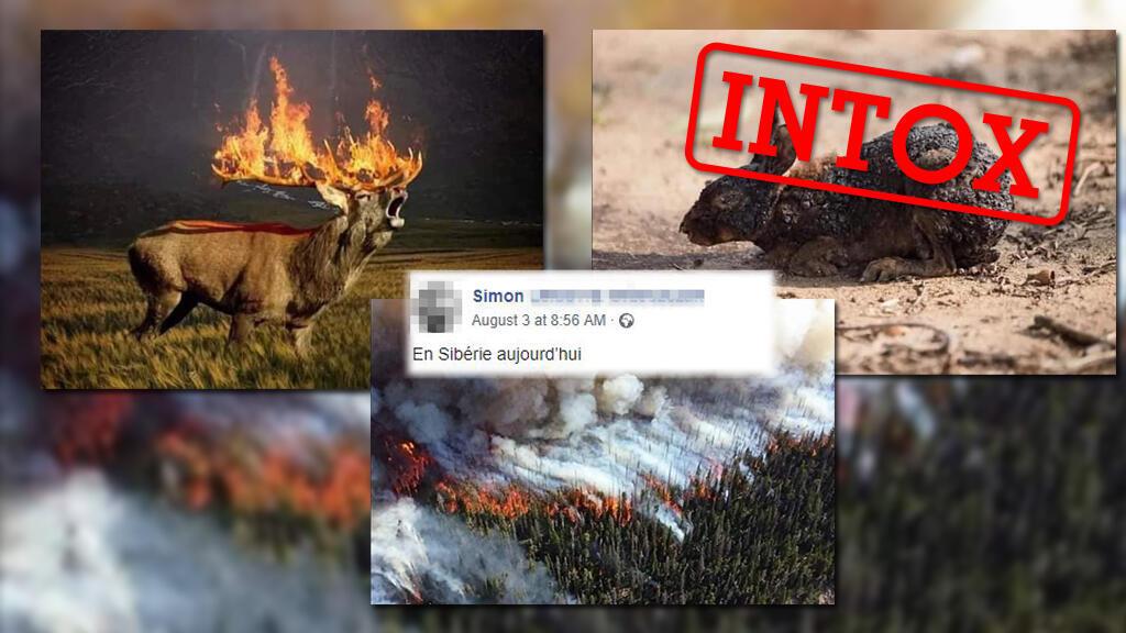 Capture d'écran de plusieurs des photos détournées prétendant montrer les incendies de Sibérie