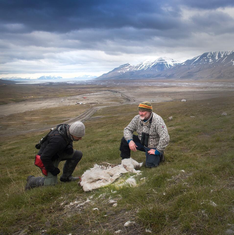 Photo prise dans l'archipel du Svalbard, en juin2019. Crédit: Siri Uldal / Institut polaire norvégien.