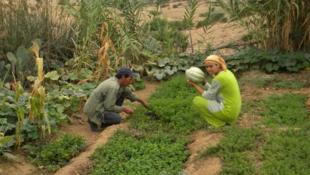 Des habitantes de Bachroua dans un des jardins écologiques. Toutes les photos sont prises par l'association Ibn al Baytar.