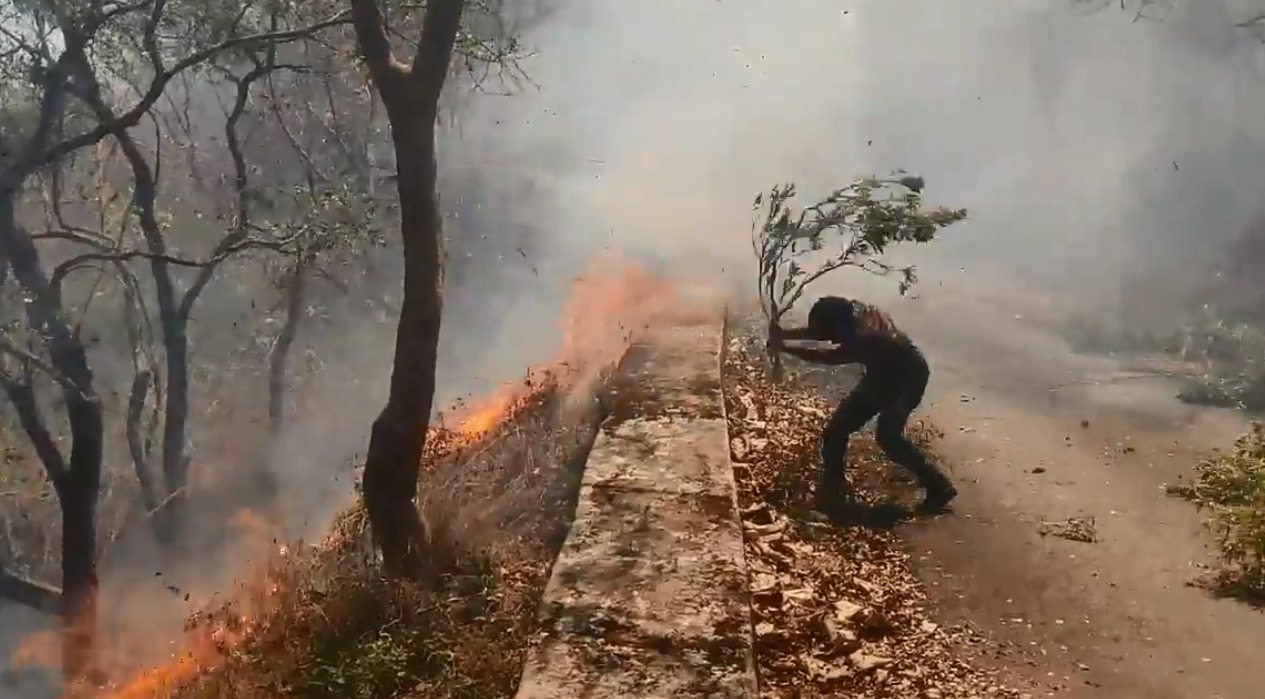 An environmental activist tries to use a branch with leaves to tamp down the raging forest fire. Source: Nakul M Dev, Facebook