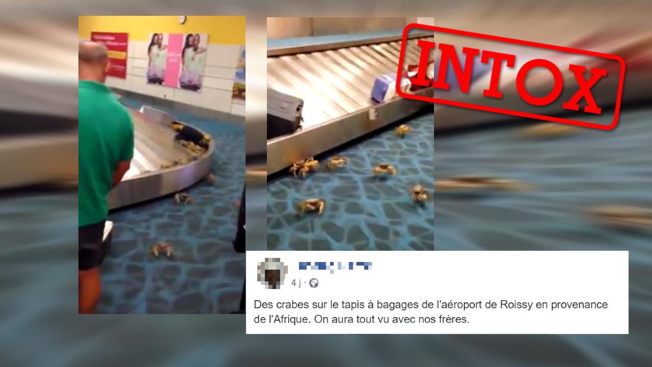 Des internautes prétendent que des crabes se seraient échappés de bagages à l'aéroport de Roissy, en France. Mais la scène est beaucoup plus ancienne.