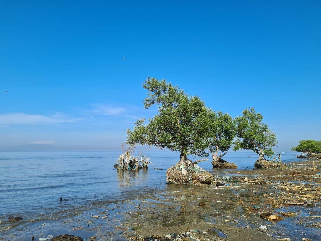 Mangrove près du front de mer, photo extraite de l'Instagram de Diovani De Jesus