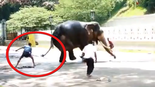 An amateur video shows how elephants are treated during a festival in Sri Lanka. Video shared by Saving Ganesh.