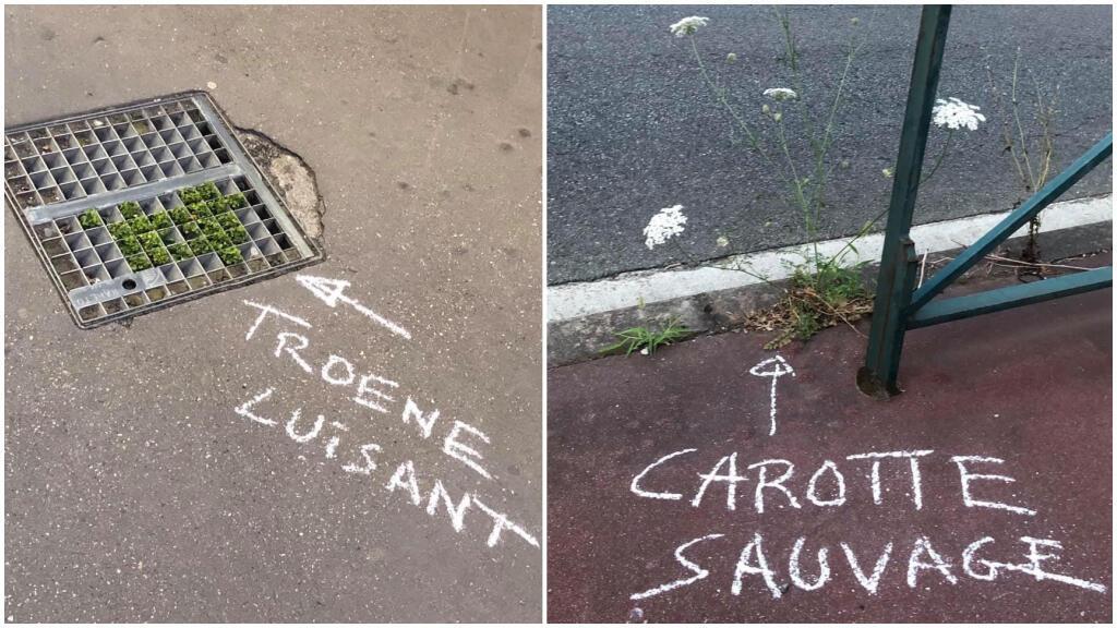 Des inscriptions visibles sur les trottoirs de la ville de Toulouse. Photos Valérie Bernard / Muséum de Toulouse.