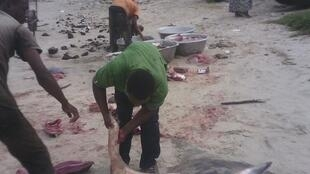Butchered rays on Songolo beach, in Pointe-Noire. Photo sent by our Observer Max.