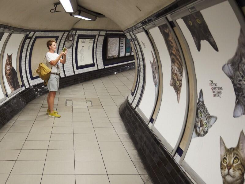 Clapham Common tube station has been covered with images of cats, the project will last for two weeks this September. (all photos from James Turner, Citizens Advertising Takeover Service)