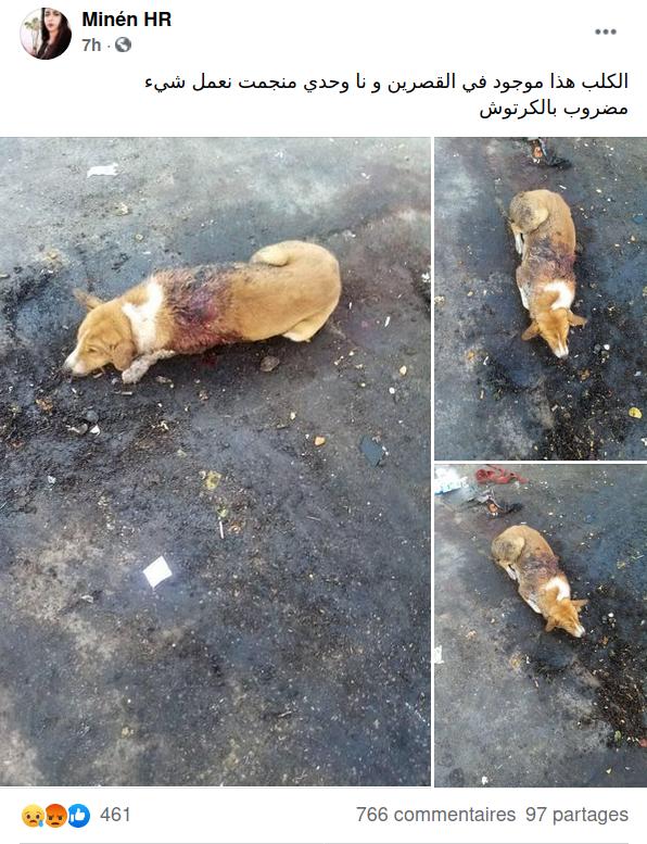 """""""Je ne sais pas quoi faire. Il a été blessé par balle"""", commente cette internaute de Kasserine (ouest)."""