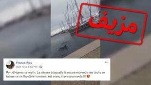 يدعي هذا الفيديو أنه يُظهر دلفينا يسبح في ميناء في جنوب فرنسا. صورة شاشة.
