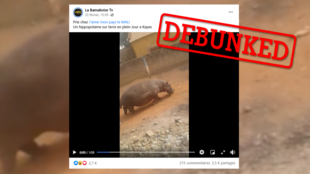 A video reportedly showing a hippopotamus on the loose in a village in Mali has been repeatedly shared on Facebook. It turns out, however, that this video was filmed in Senegal back in 2019.