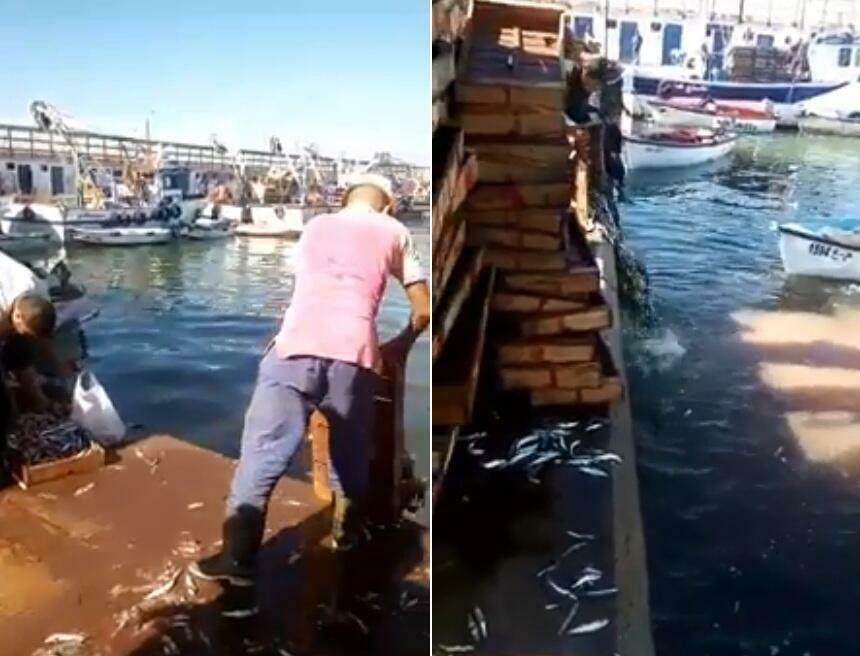 Captures d'écran de la vidéo montrant les pêcheurs du port de Mostaganem en train de jeter les sardines pêchées à la mer.