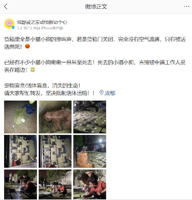 """""""Le conteneur est rempli de chats et chiens qui crient. Si la porte du conteneur est fermée, l'air ne circule pas et ils pourraient tous mourir d'asphyxie. Beaucoup de chats et de chiens sont mourants ou déjà morts [...]"""", écrit le refuge pour animaux de Chengdu, dans cette publication Weibo, lundi 3 mai."""