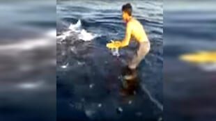 An Iranian fisherman posted a video online in which he can be seen surfing on the back of a whale shark, to the consternation of many people on social media.