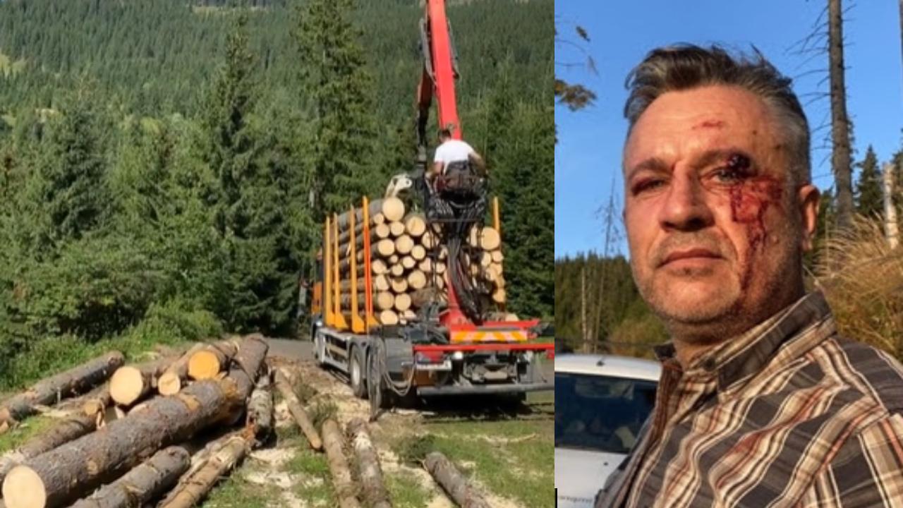 Romania Wood Mafia