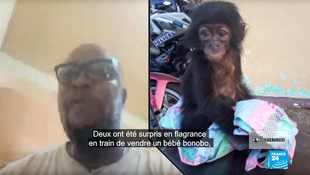 Avec sonONG Conserv Congo, Adams Cassinga a réussi à faire condamner en juillet2019 des trafiquants de bonobos. Capture d'écran / Les Observateurs de France24.