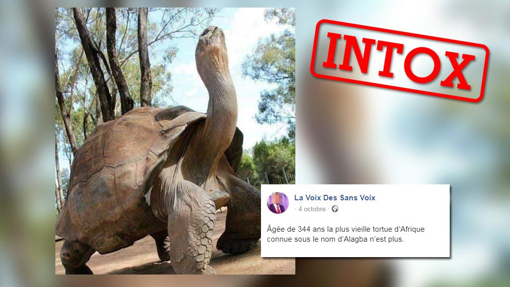 Cette photo montrerait une tortue vieille de plus de trois siècles récemment décédée... mais la photo autant que les informations sont à prendre avec précaution.