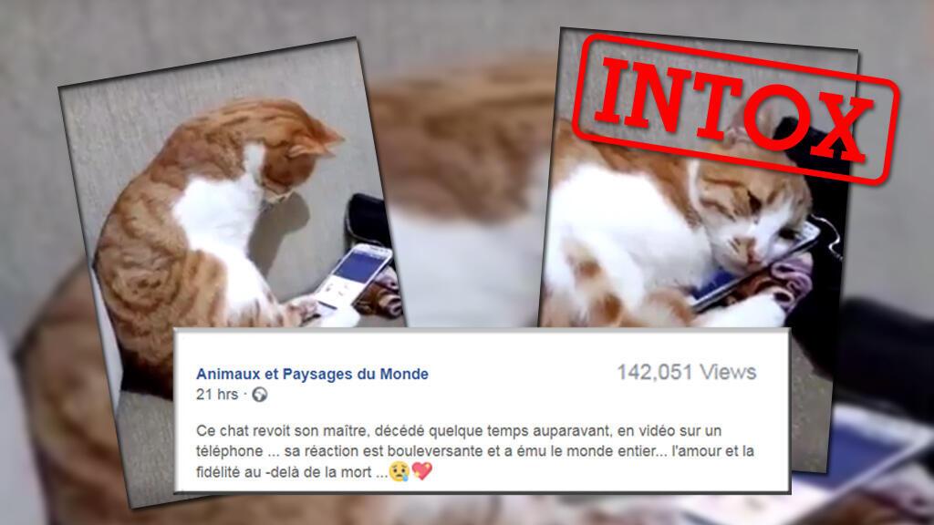 Un chat qui regarde une vidéo de son maître, et qui se blotit contre le téléphone en entendant sa voix... C'était trop mignon ! Mais c'est faux.