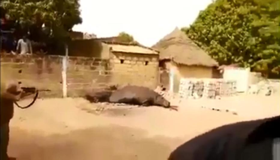 A hippopotamus was shot down by a hunter in the street in Kédougou, Senegal, on March 31.