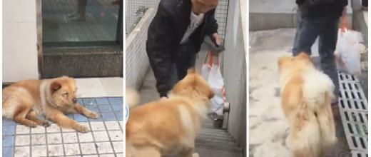 This dog spends all day waiting at the subway stop in Chongqing for his owner to get home from work.