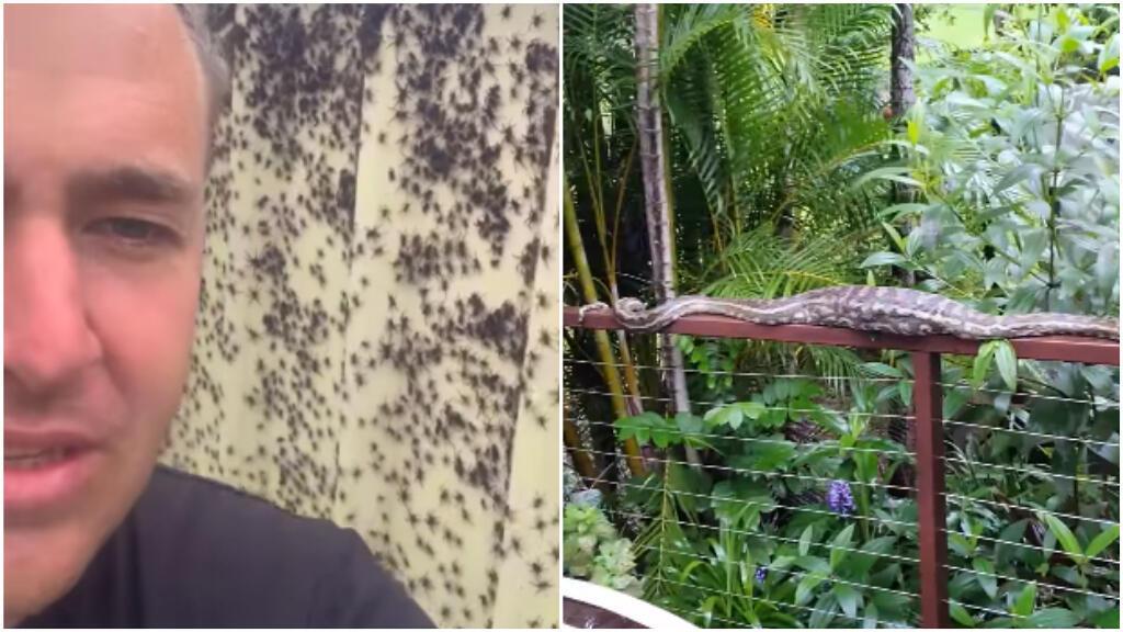 araignées serpents australie