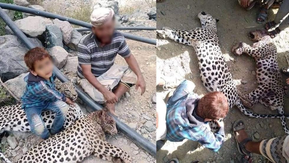 Activists enraged as photos emerge of endangered leopards killed in Yemen