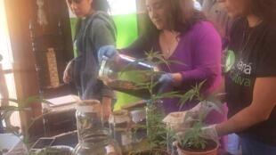 """La fondation """"Mamá Cultiva"""" fait la promotion du cannabis à des fins médicales, pour aider les enfants malades. Toutes les photos publiées dans cet article viennent de la fondation."""