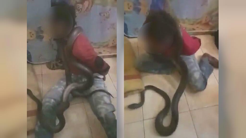 Captures d'écran de la vidéo.