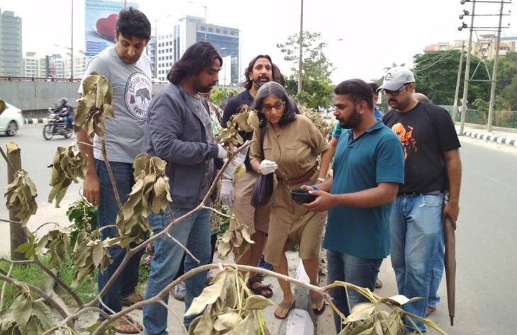 Des bénévoles examinent les restes de 25 arbres, découpés, au bord d'une route. Photo de notre Observateur.
