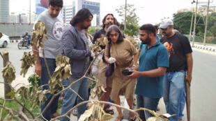 اعتراض کنشگران به قطع درختان
