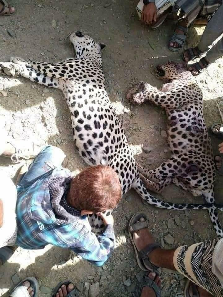 Photo showing a crowd gathered around the two leopards that were killed in Lawdar, in southern Yemen, July 2, 2021.