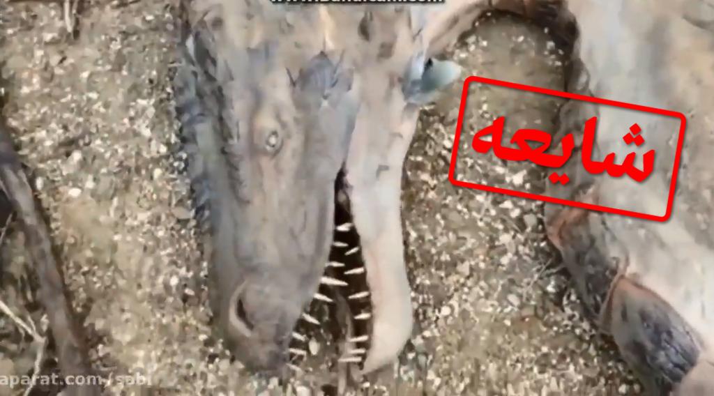 تصویری از اژدهایی که ادعا شده در کرمانشاه پیدا شده است
