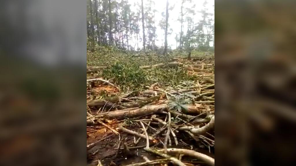 Au Gabon, les ONG alertent sur la destruction des mangroves dans le Cap Estérias, au nord de Libreville. Capture d'écran.