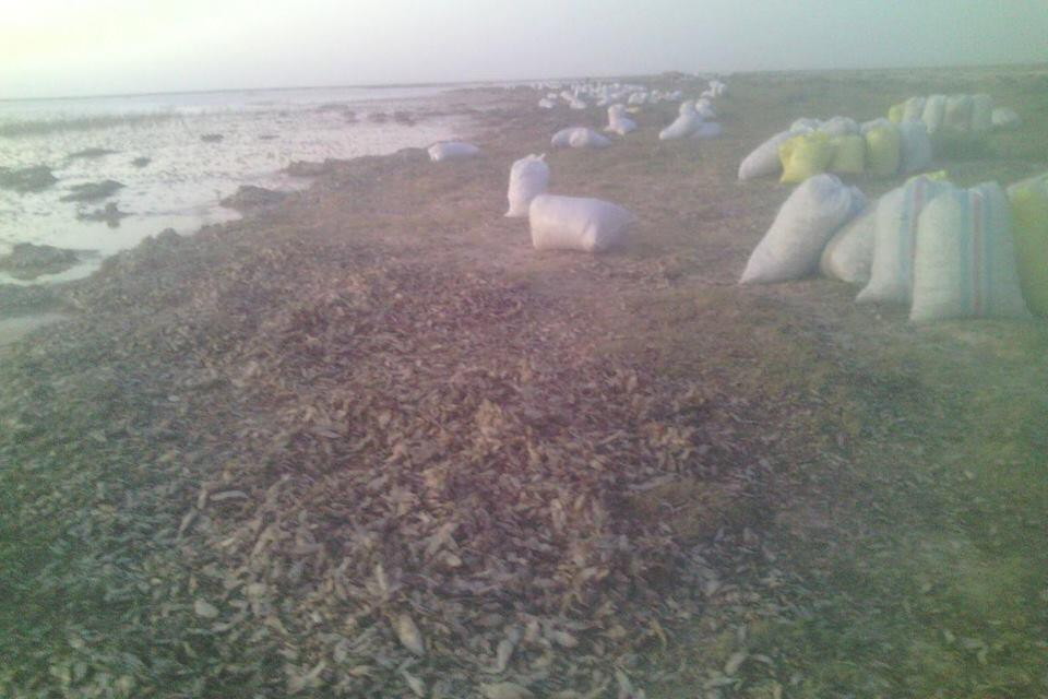 Iranians bagged up the dead fish to be turned into fodder (All photos from Facebook)