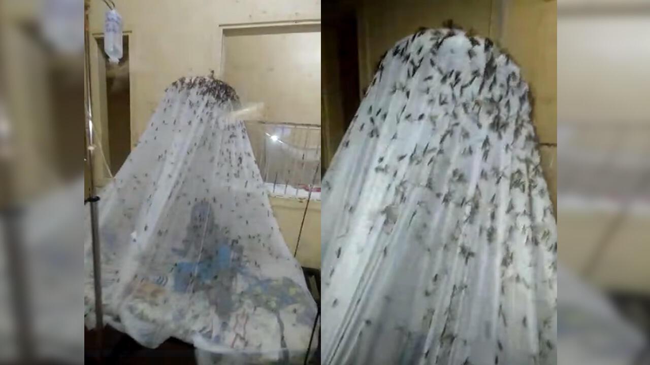 Des insectes qui s'agglutinent sur une moustiquaire, la scène a été filmée au CHU de Brazzaville.