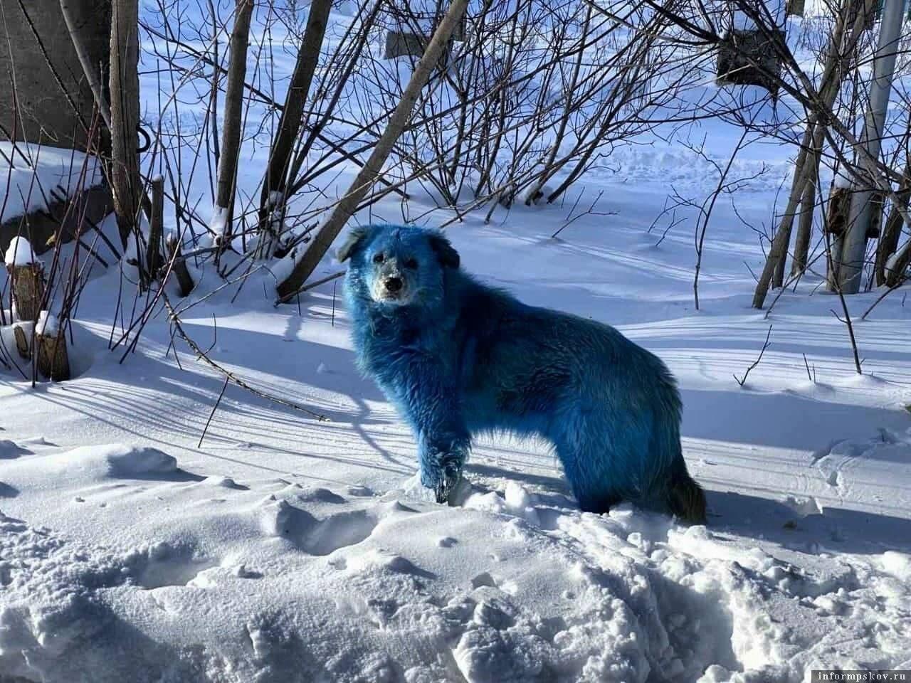 Un chien errant aperçu près de Dzerjinsk.