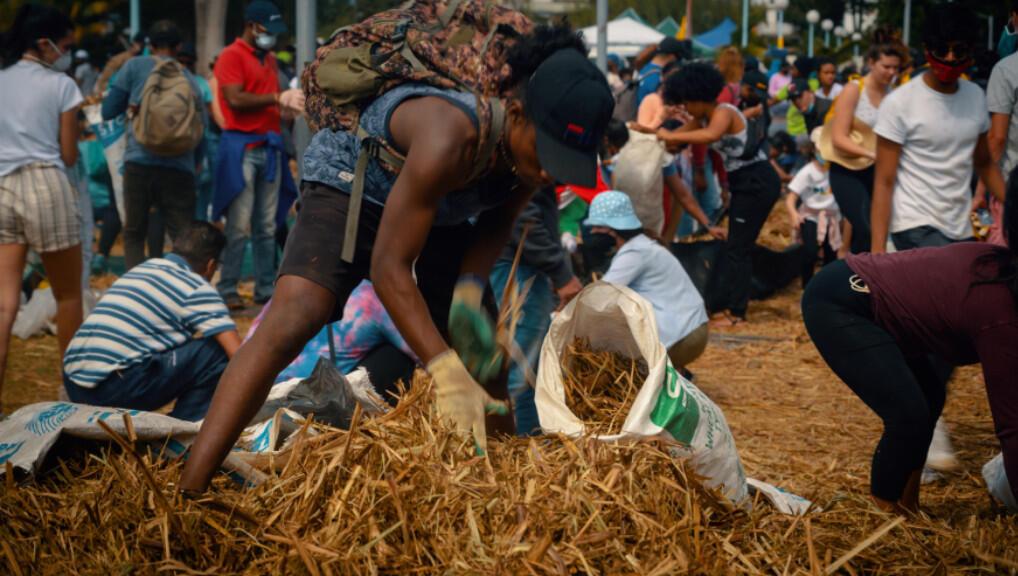 Les populations se mobilisent pour fabriquer des boudins à partir de pailles de canne à sucre pour lutter contre la marée noire. Photo : ONG Eco-Sud